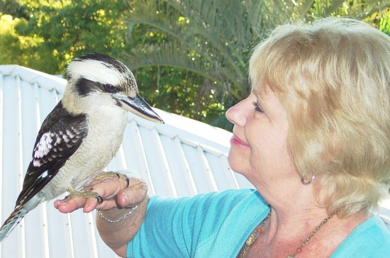 Hele and Kookaburra